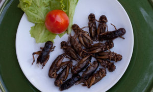 Fried insects at a roadside store