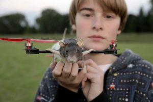 Mice turned into a helicopter
